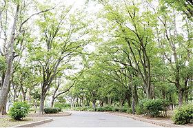 篠崎公園(A地区)…1,590m