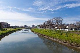 馬込川の桜並木