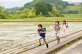 田んぼ道を集団登校で通学する児童はどこか微笑ましい