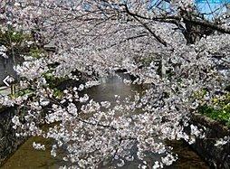 【遂に販売開始】プレジデント山本町南×桜並木の美しい街並×河内...