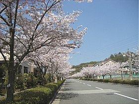 桜が満開となり美しい街並みになります。
