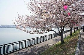 ■公園も点在し、春の桜、夏のプール、秋の散策、ランニングにも
