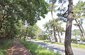 旧東海道『大磯宿』の名残を感じる《松並木》(徒歩2分)