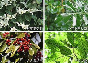 豊富な植栽