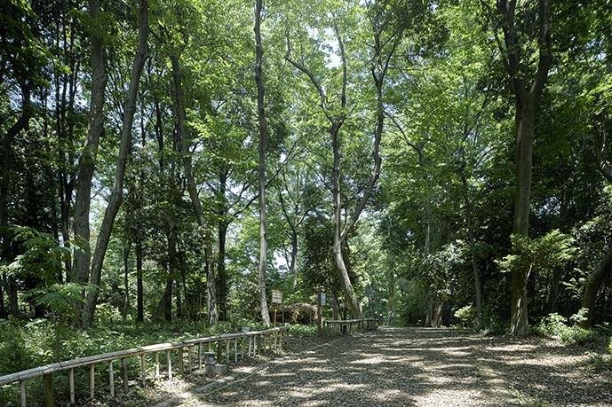 秋葉の森総合公園 約1,490m(徒歩18分)