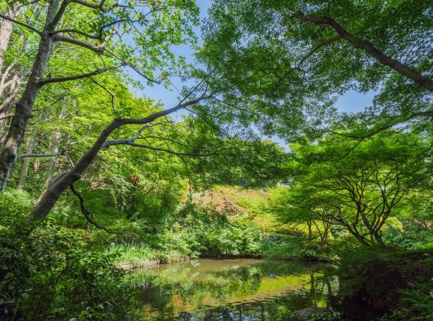 池田山公園 約550m(徒歩7分)