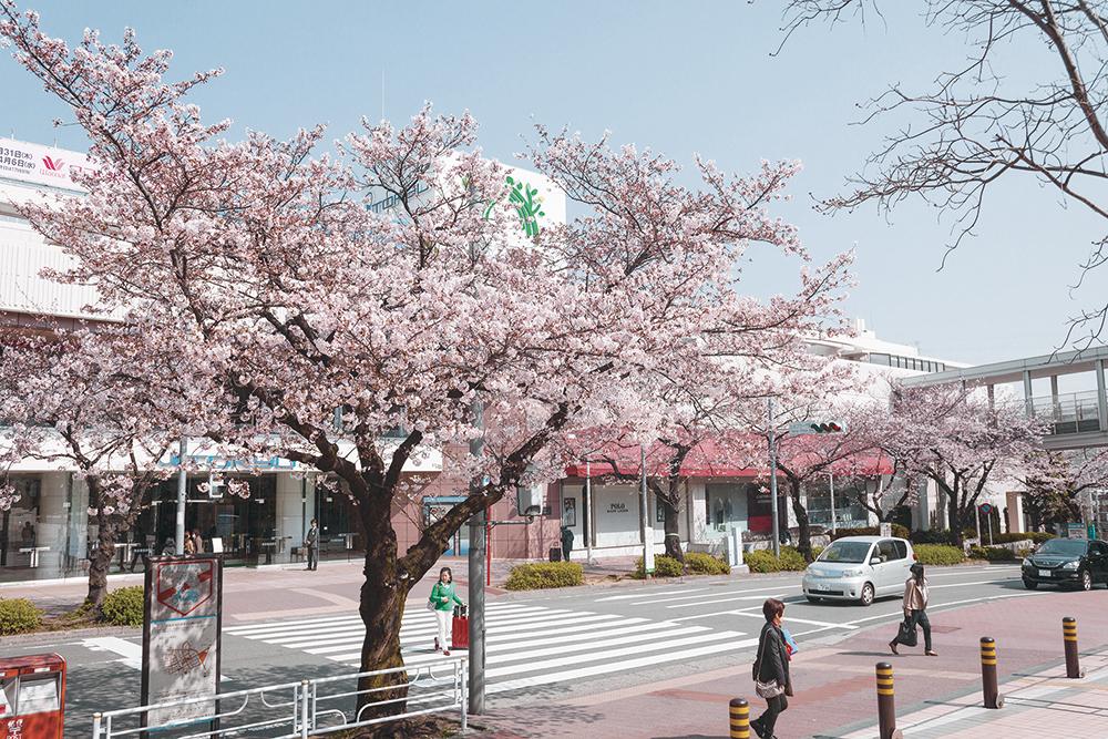 東急百貨店/たまプラーザテラス ノースプラザ 約150m(徒歩2分)