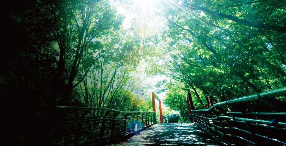 都筑中央公園 約530m(徒歩7分)