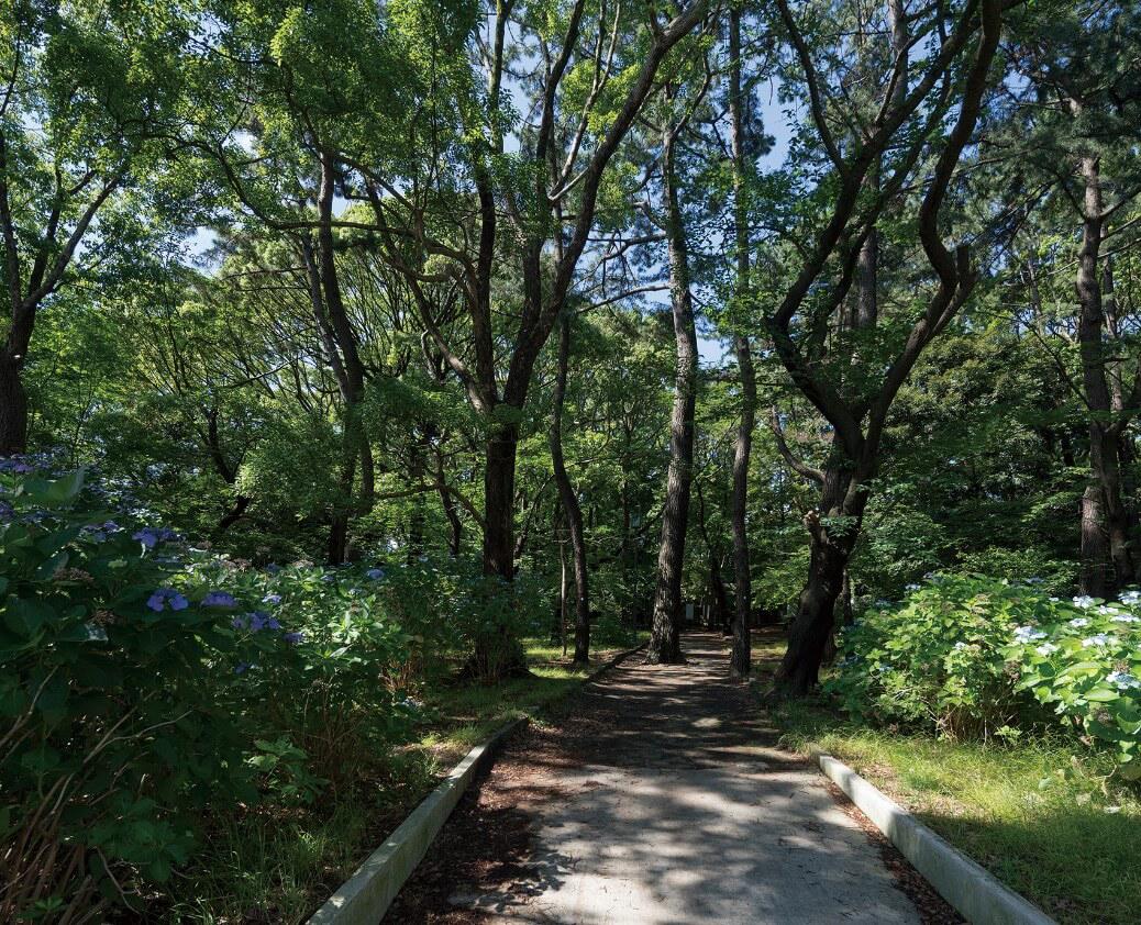 八幡山公園 約820m(徒歩11分)