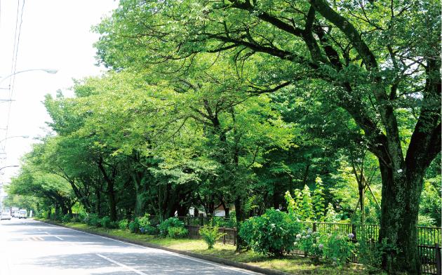 玉川上水緑道 約1,090m(徒歩14分)