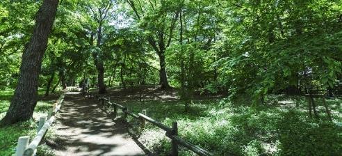 玉川上水緑道 約140m(徒歩2分)