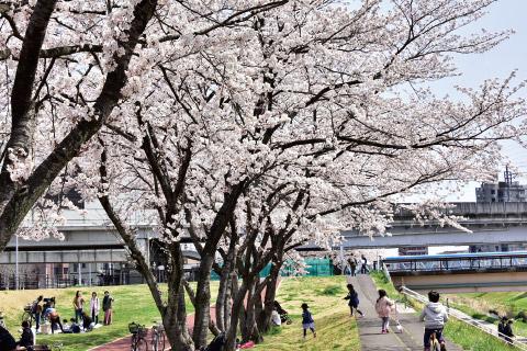 大野田イコタ公園 約250m(徒歩4分)