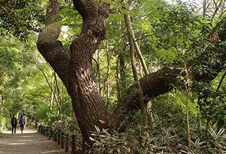 国立科学博物館附属自然教育園 約970m(徒歩13分)※提供写真