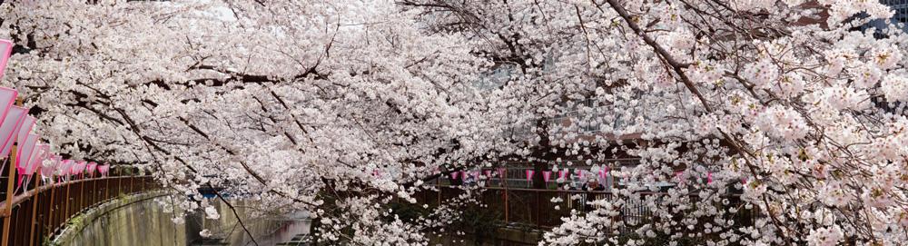 目黒川 約670m(徒歩9分)(2018年3月撮影)
