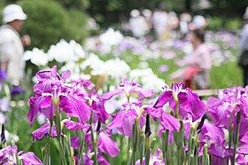四季折々の花と緑が楽しめる堀切菖蒲園(徒歩4分)