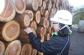 ◆原木確認作業