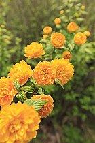 街並みを彩る花々