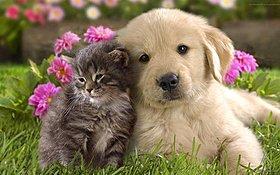 愛犬、愛猫と過ごすおうち