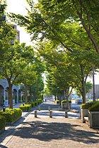 歩行者優先の緑道でお年寄りにも子供にも安心安全。