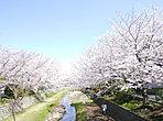 「お母さんと赤ちゃん」がお花見を楽しんでいる野川は、物件の近くを流れているので四季を感じる街並みとなってます。川沿いで子供と桜を見ながら、お昼ご飯を食べたりしていですね。
