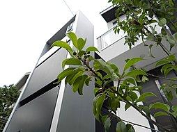 東京都杉並区上井草1-56-5(地番)