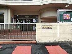 周辺環境:白菊幼稚園