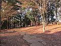 富士見台公園ま...