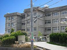 谷八木小学校 約10m