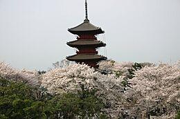 その他池上本門寺の桜まで1211m