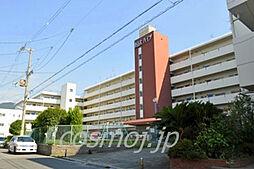 東山本ハイツ[510号室]の外観