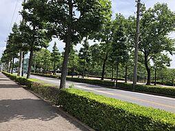 マンション前の風景です。緑豊かでとても気持ちがいいです 徒歩 約1分(約5m)