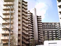 コート和泉府中セルカC棟[1213号室]の外観