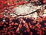 周辺,4LDK,面積80.47m2,賃料28.5万円,東京メトロ日比谷線 恵比寿駅 徒歩10分,東京メトロ日比谷線 広尾駅 徒歩9分,東京都渋谷区広尾2丁目