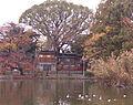 【公園】桃ケ池...