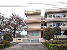 青梅市立新町小学校(50m)