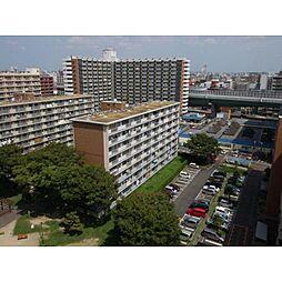 中駒九番団地5号棟[8階]の外観