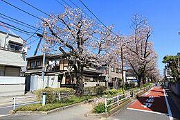 春には桜並木が続く呑川緑道