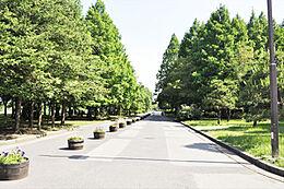 都内有数の広さを誇る水元公園