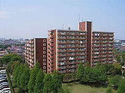 美浜東エステート11号棟[5階]の外観
