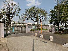 桜小学校(約520m)