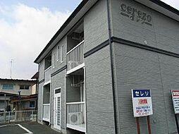 CEREZO(セレソ)