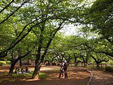 公園哲学堂公園まで230m