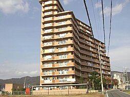 サンライズマンション岩出8[14階]の外観